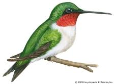 hummiongbird.jpg